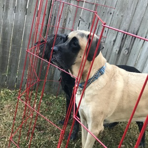 Homemade dog fence