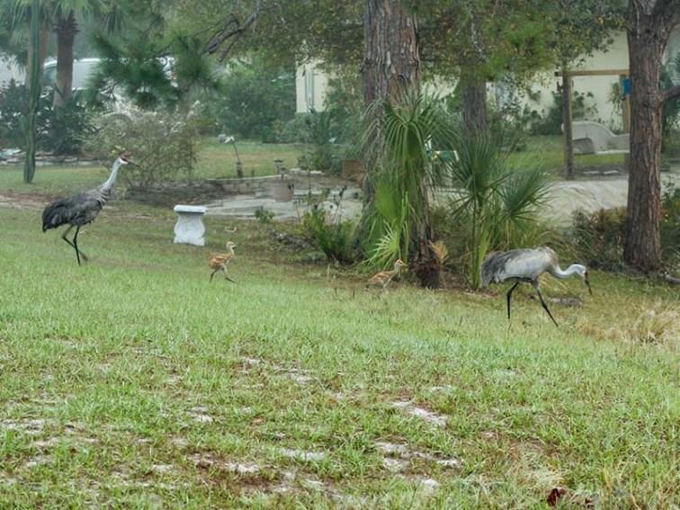 cranesheadout