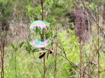 greenstickbubble