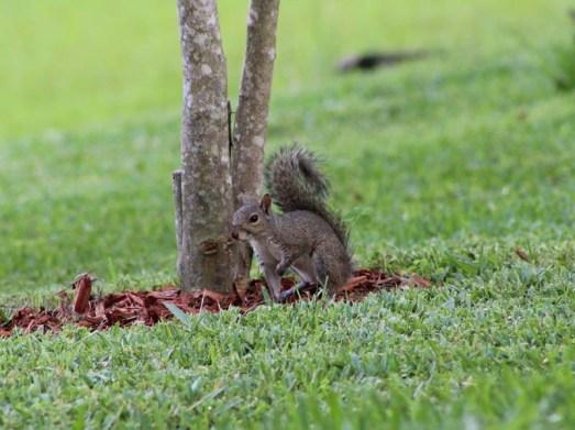 Deanssquirrel