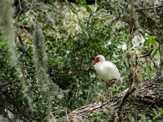 egrettree