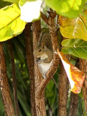 snakingsquirrel