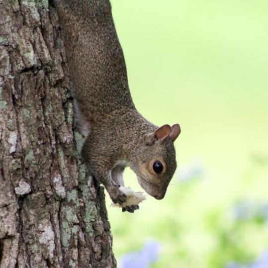 squirrelmushroom