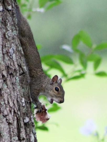 squirrelmushroom2