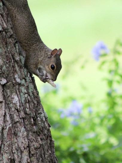 squirrelmushroom3
