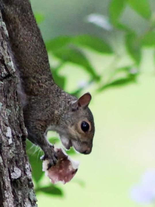 squirrelmushroom4
