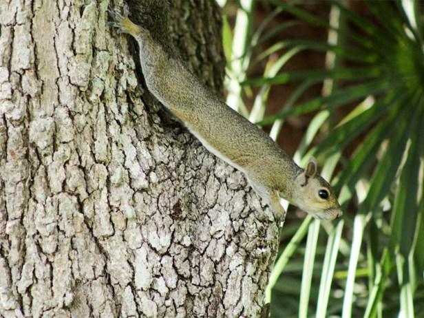 squirrelyoga