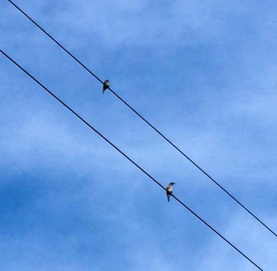 6+bluebirds