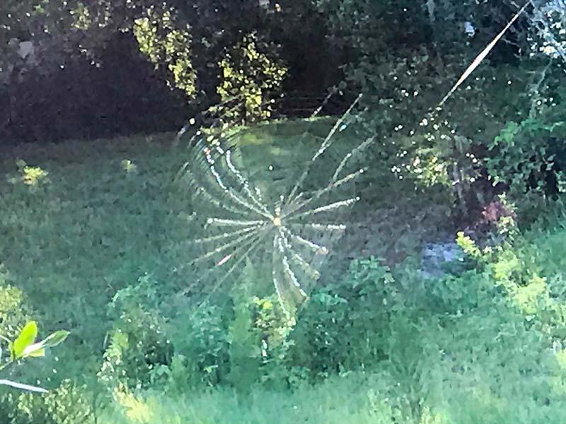 angledspiderweb