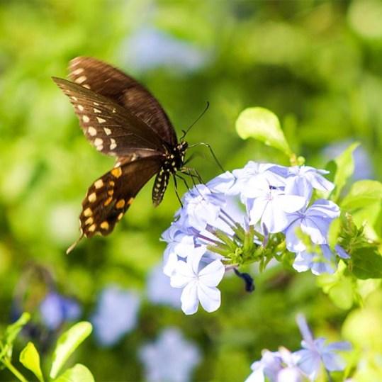 butterflyintruder1
