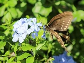 butterflyintruder2