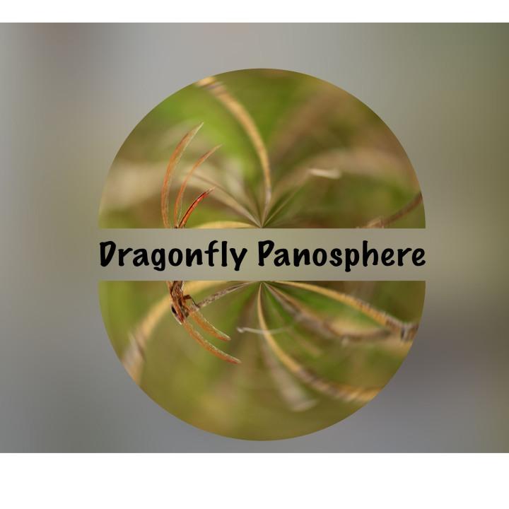 dragonflypanosphere