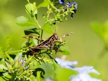 grasshopperintruder