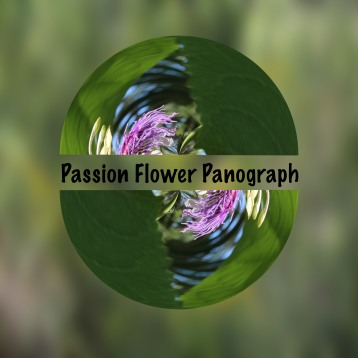 Passionflowerpanograph