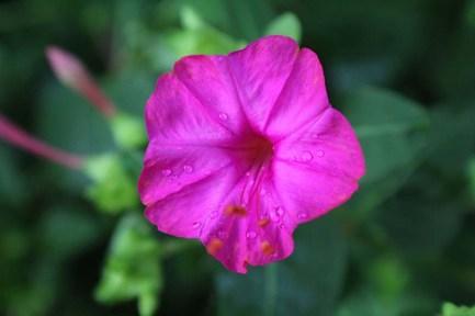 redflowerclose