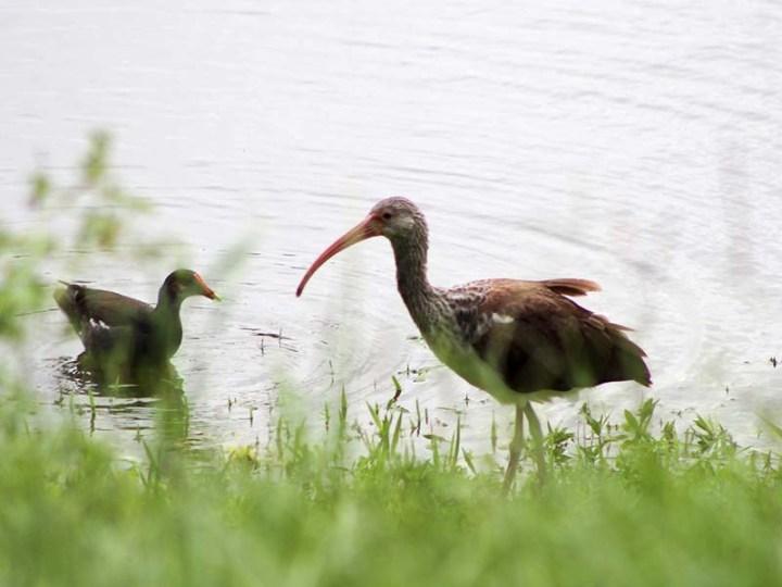 Irmabirds1