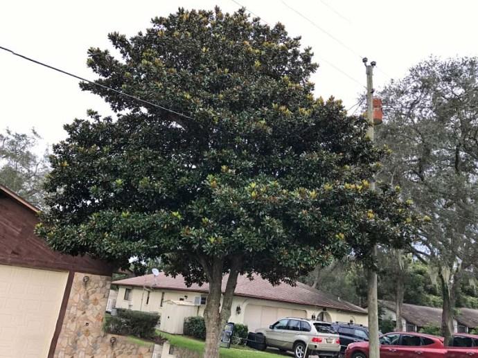 magnoliawires