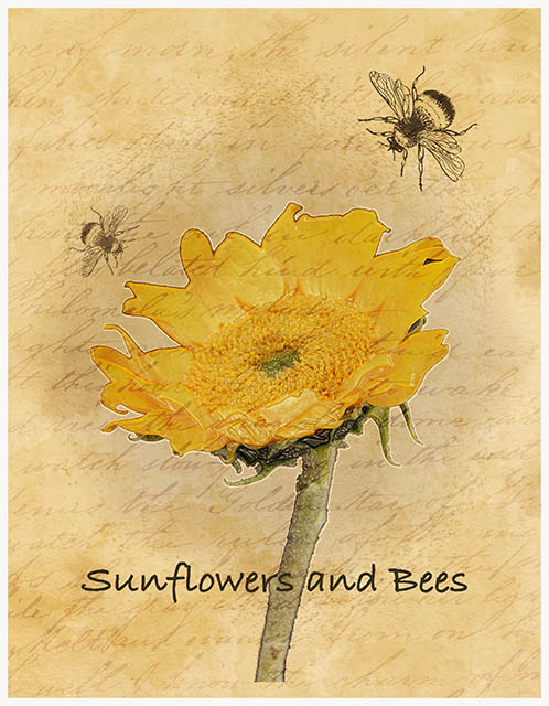 sunflowerandbeessuebarleysmall