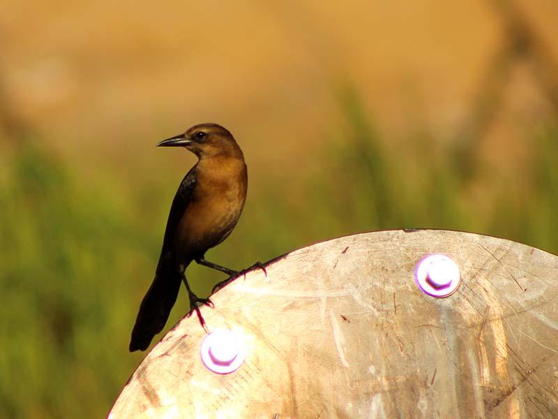 1011redbird