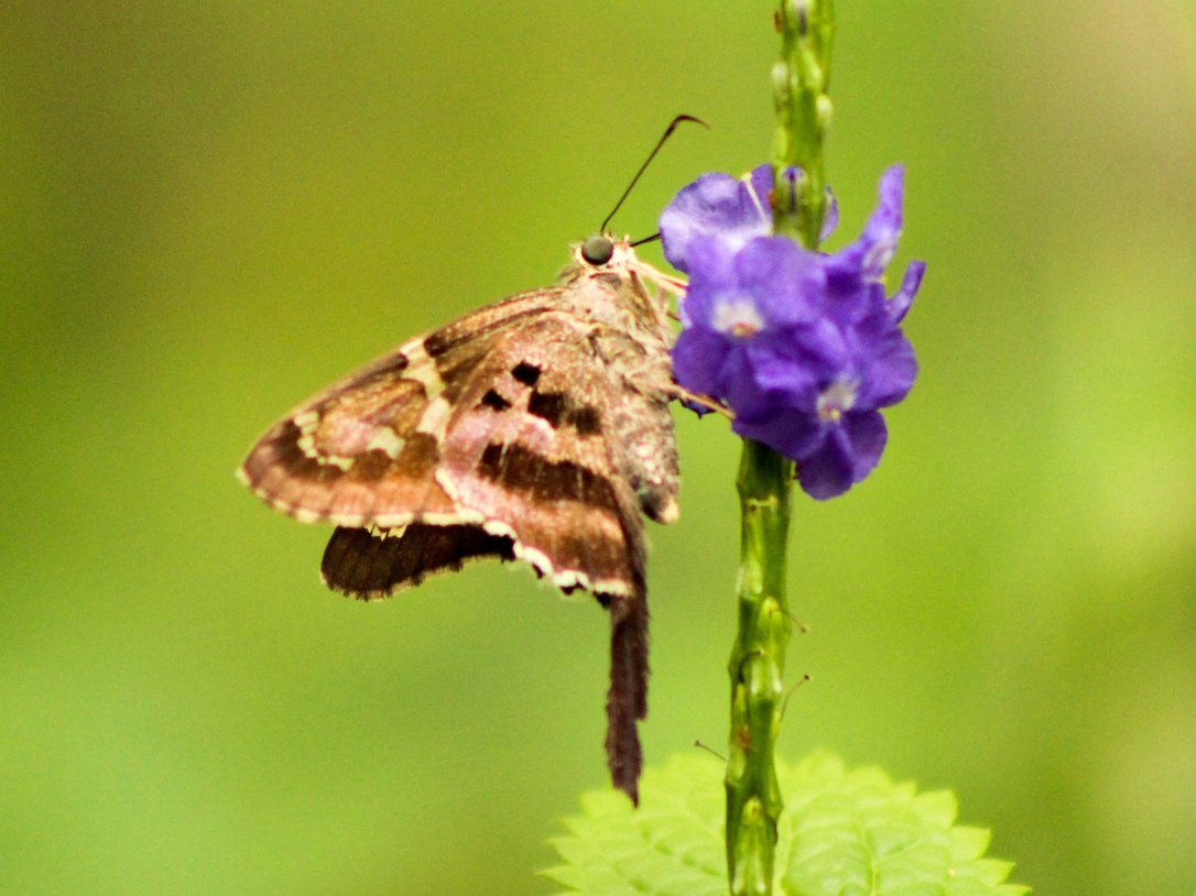 1017botanicalgardenbutterfly