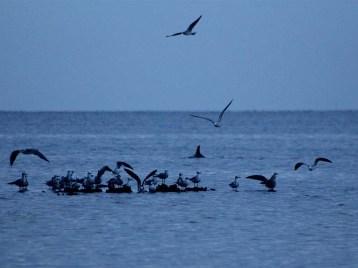 930dolphinsandbirds