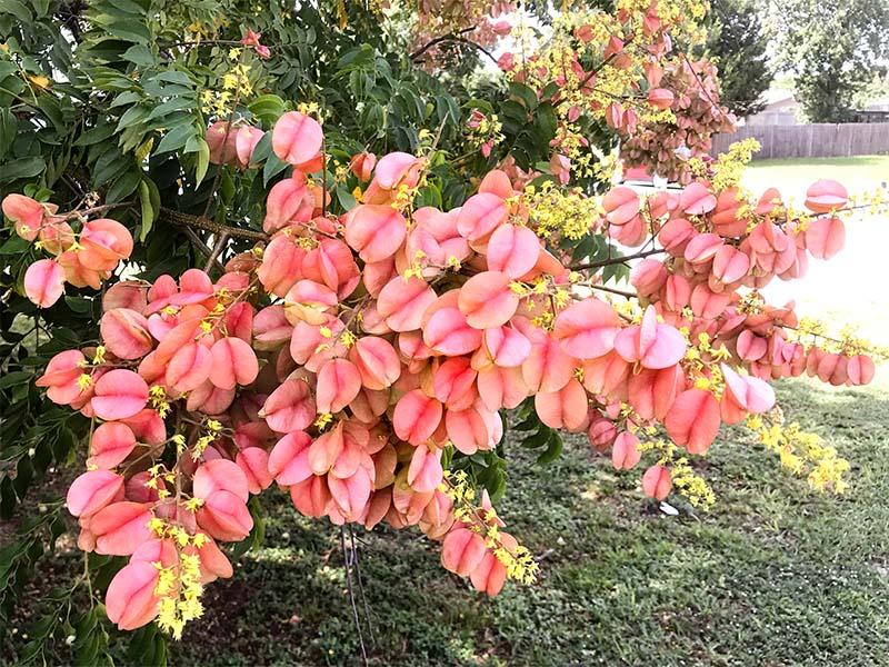 foliageflowers