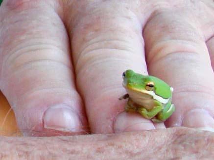 Tinyfrog