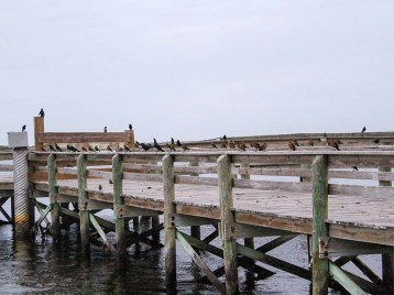 1112gracklepier