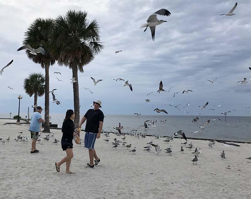1122feedingthebirds1