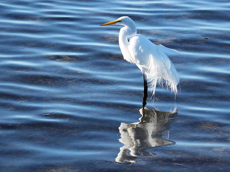 1213greategret