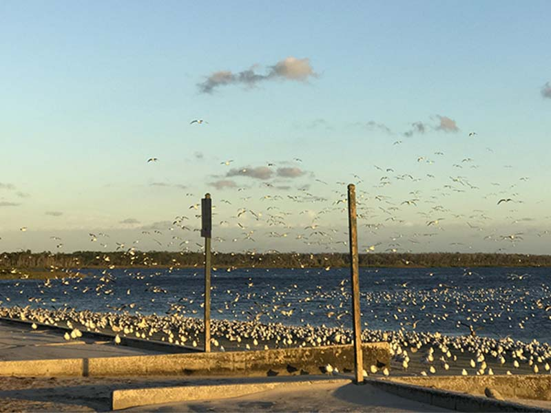 129seagulls