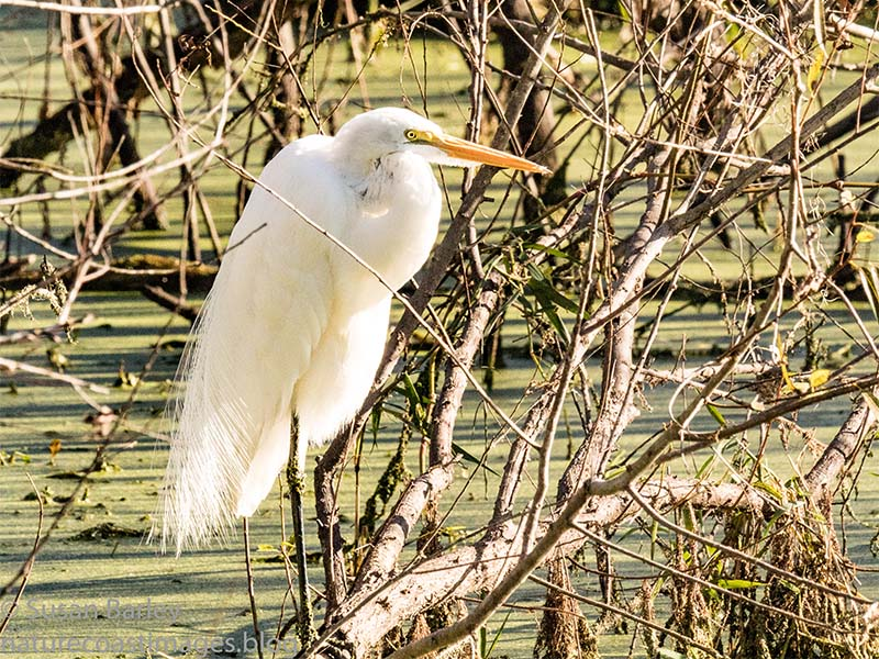 1-7greategret copy