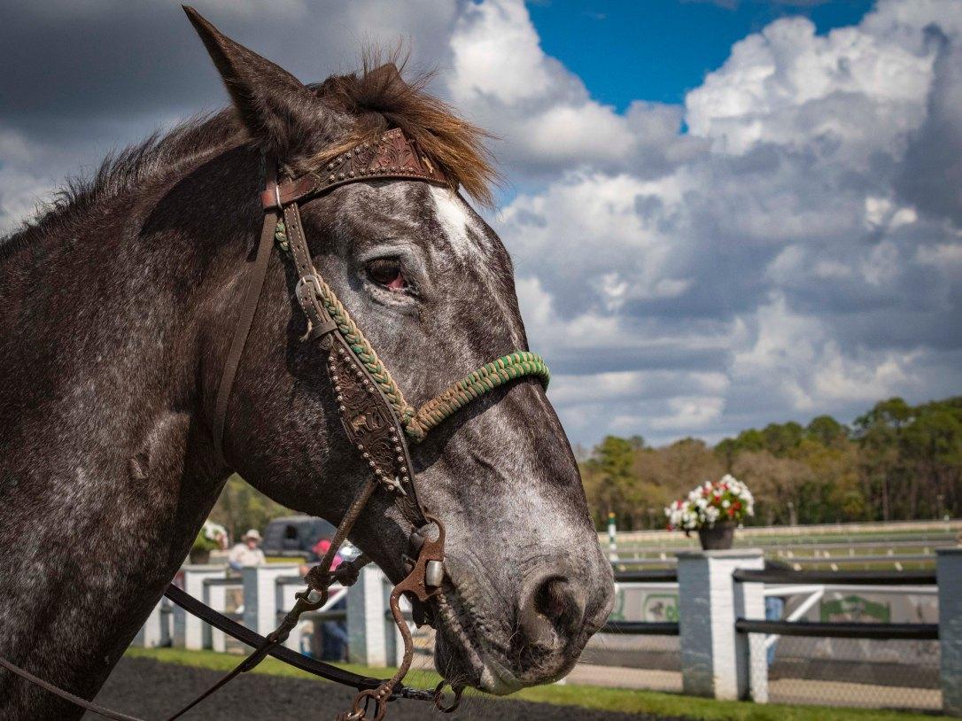 2-24horses1
