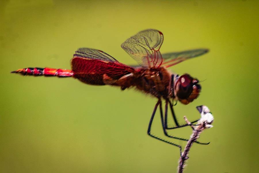 4-13dragonfly