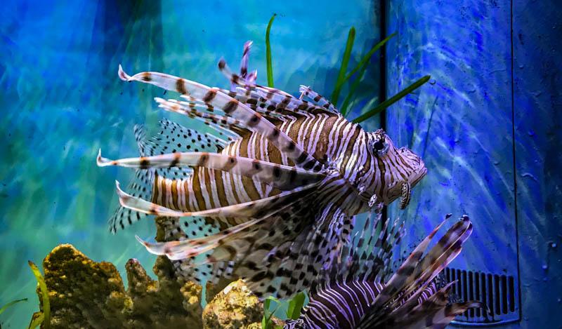 4-5zoofish