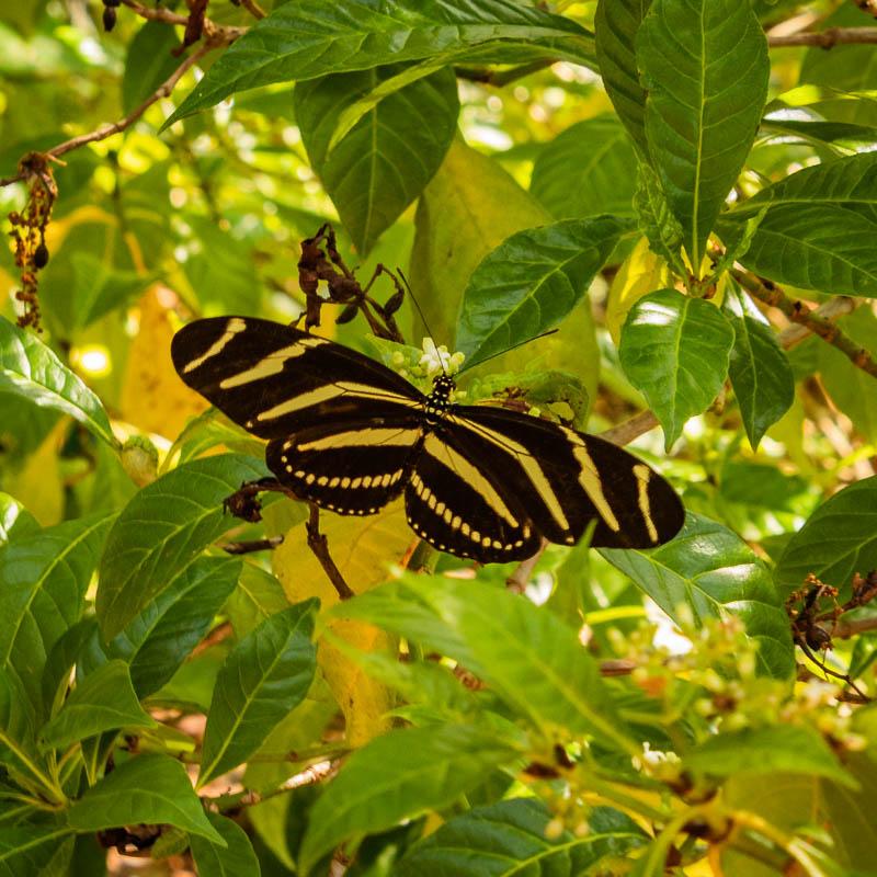 5-10butterfly
