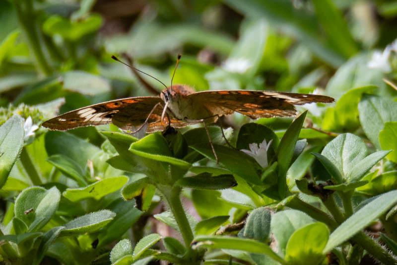 5-18butterfly