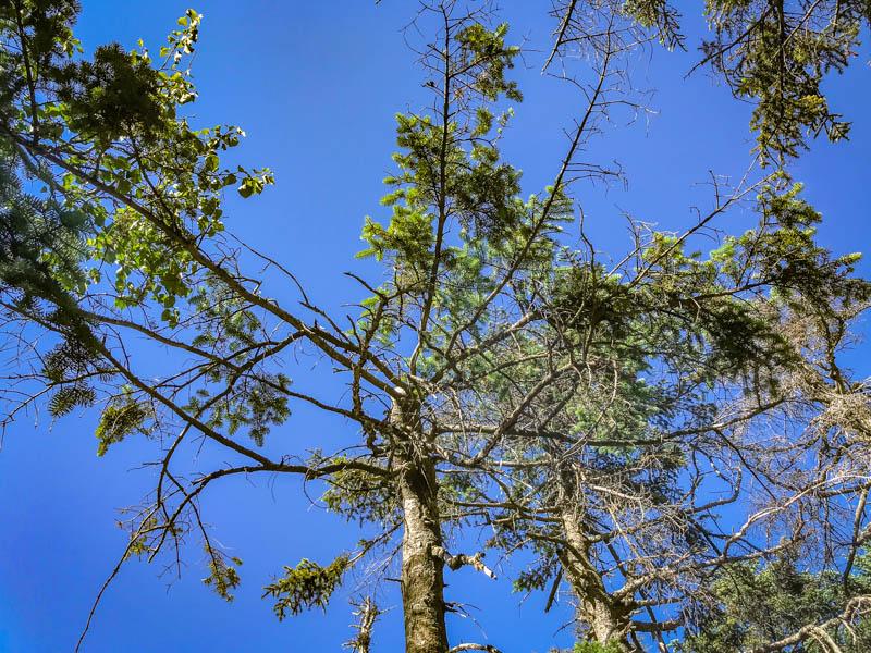 7-23trees