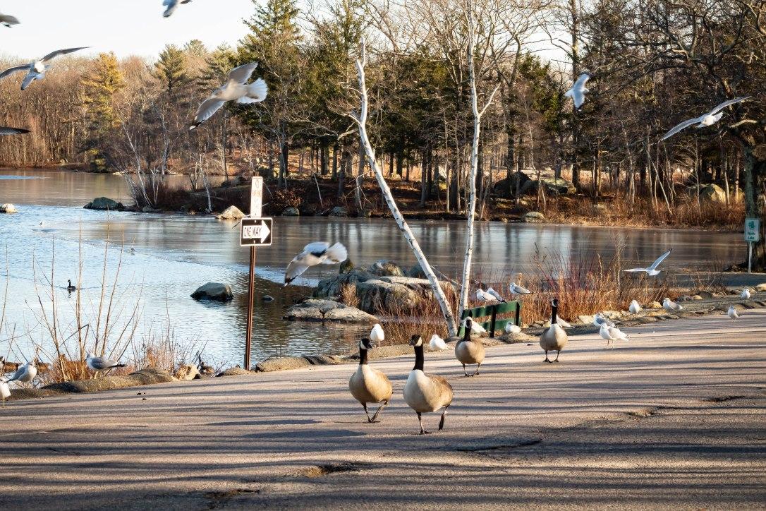 02-11-19fieldspark5