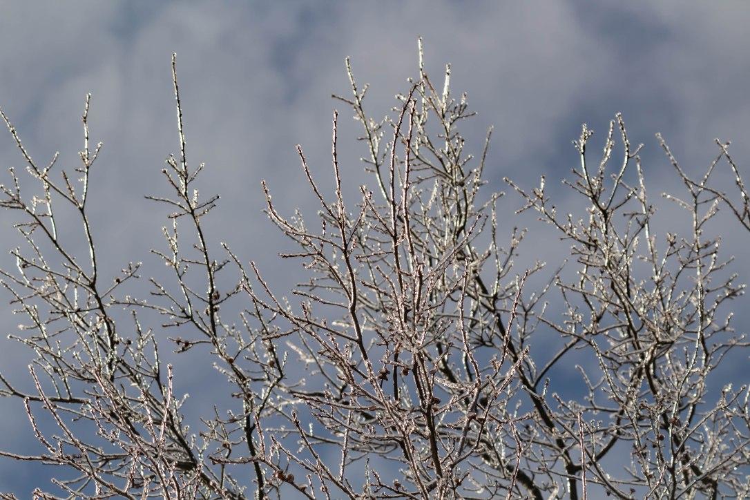 02-21-19-treetop2