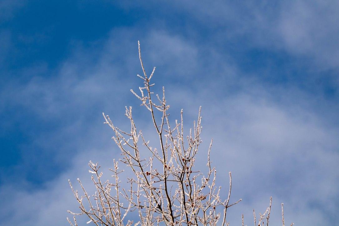 02-21-19-treetop4