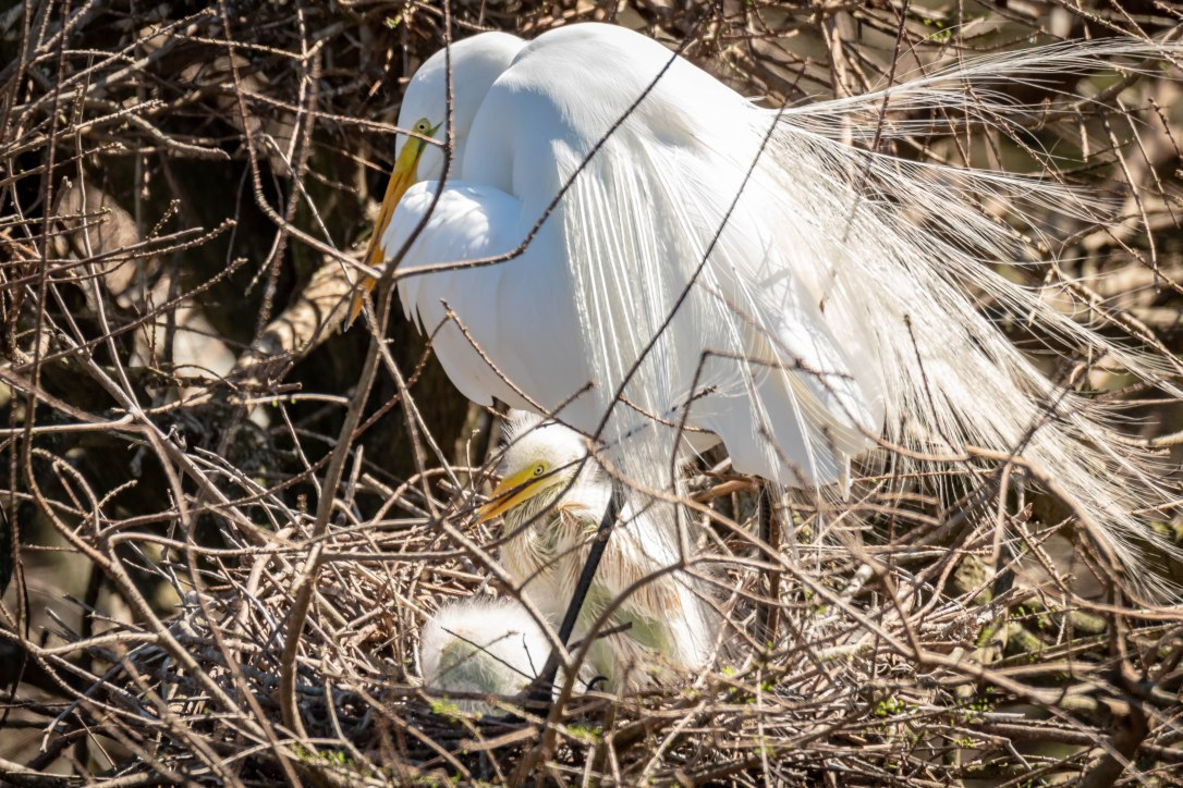 02-28-2019greategret+1