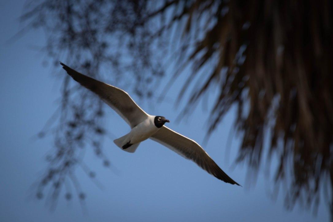 04-11-19bigbirdshoot1