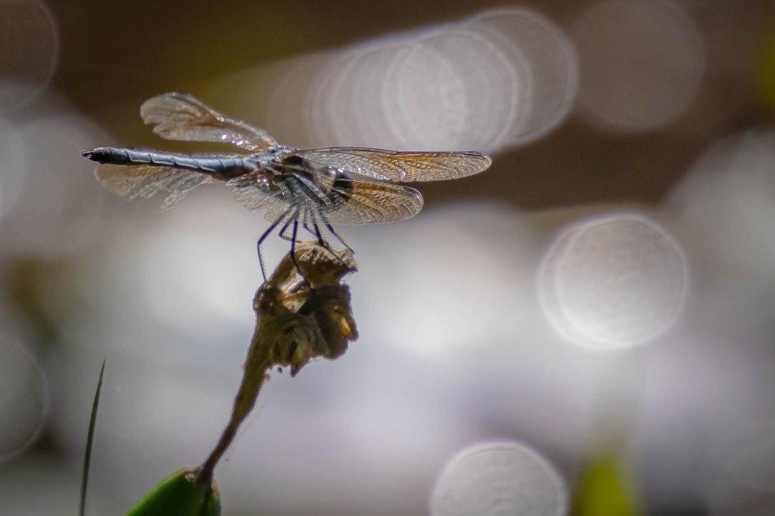 4-12-19dragonfly2