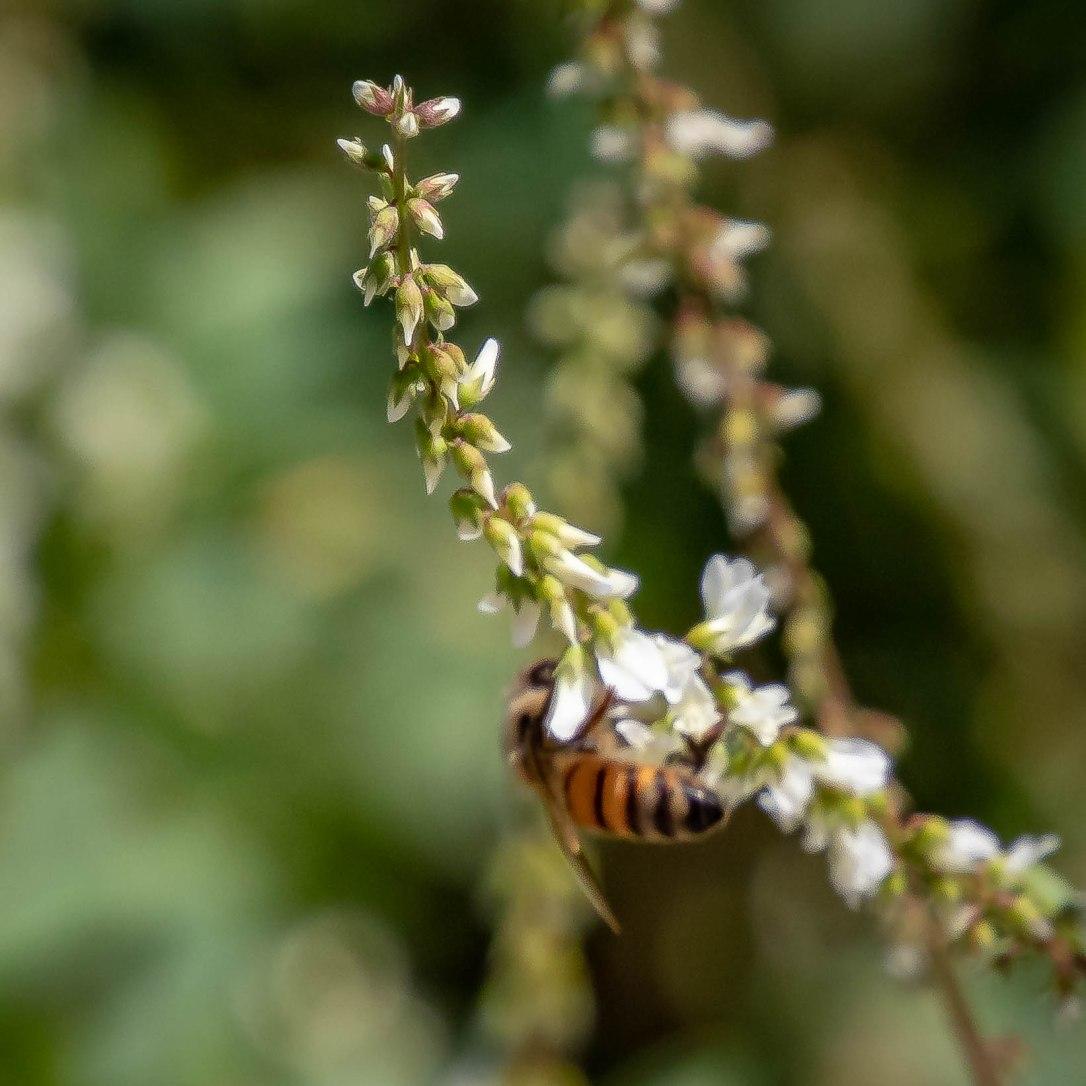 4-23-19wallspringsbee
