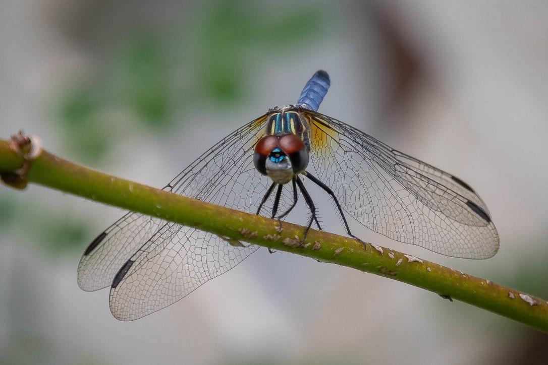 4=26-19dragonfly2