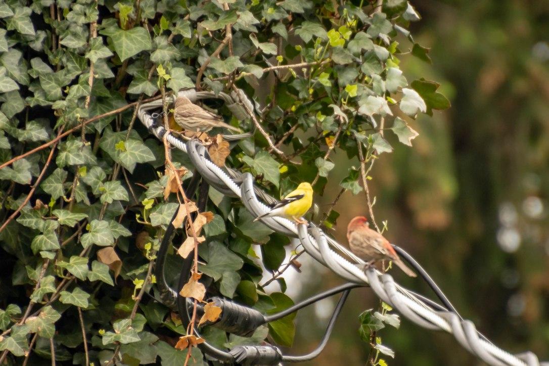 05-08-19threebirds