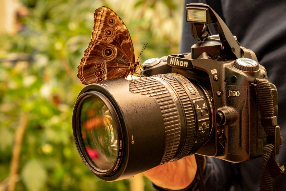 05--19nikonbutterfly