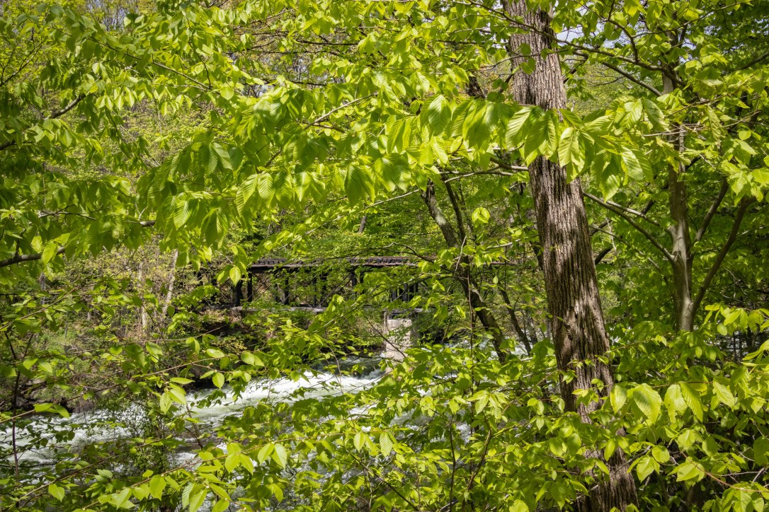 05-23-19throughthetrees