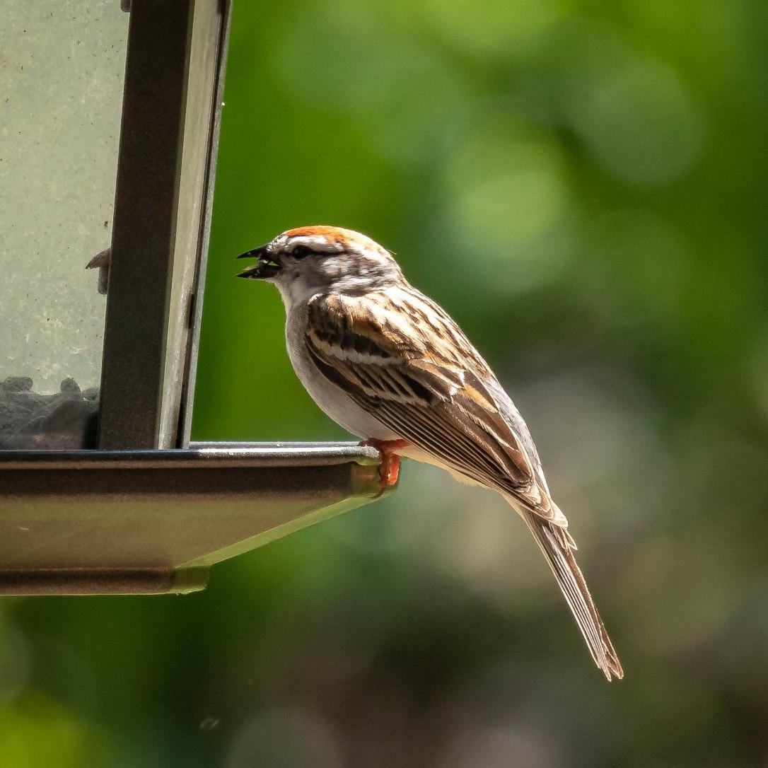 05-26-19sparrow